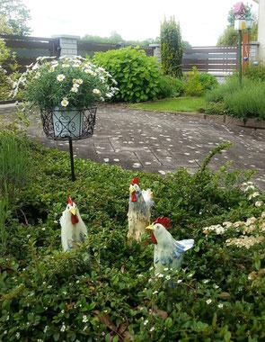 Hühnerfamilie bei Wien