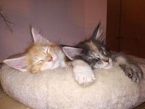 Isidor und Isabell