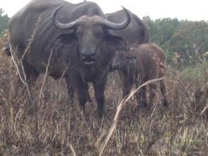 Safaris Kenia in die Shimba Hills