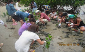 Toyo University students planting mangrove trees on the Viti Leve Island beach in Fiji