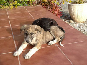 Dana y Daimon adoptados!