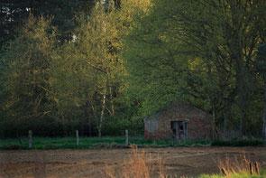 Bomenlandschap met een stenen schuilhut. Kleurfoto.