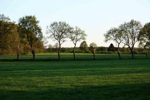 Groene weide bomenlaan en op achtergrond bos. Kleurfoto.