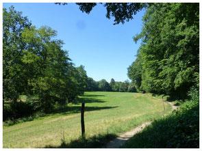 """Röder-Auwiesen in ihrer vollen Weite. Rechts die bewaldeten  Abhänge der Röder (die """"Leithen"""") vom Lotzdorfer Schafberg,  links der Ufer-Bewuchs der Röder."""