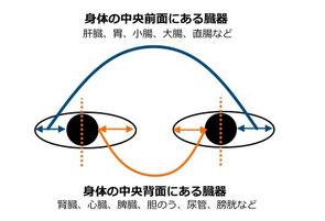 白目にあらわれる症状の場所により、弱っている身体の部位を見つけよう!(白目の上部と下部もそれぞれ該当部位が異なります)