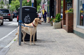 写真の犬と事故事例の犬は関係ありません