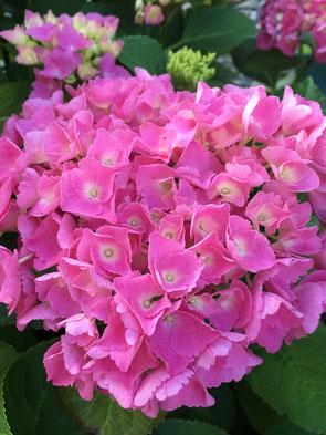 Blüte Schönheit Verzauberung Seelen Zauber Tuggen