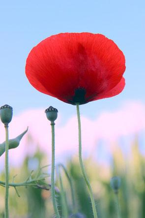 Blüte aus liegender Position fotografiert