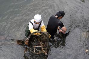 水中に沈みボロボロになった自転車の回収は大変です