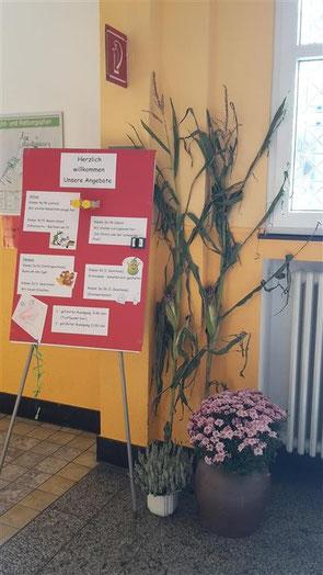Bunte Plakate in den Eingangsbereichen im Neu- und Altbau informierten über die projektorientierten Arbeiten in den jeweiligen Klassen.