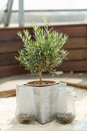 Einen Baum zu pflanzen ist wohl die langfristigste Erinnerung als symbolische Handlung im Rahmen einer freien Trauung.
