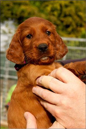 Annie, 5.5 Wochen