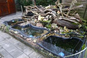 Anlage eines Gartenteichs Gartenteich Teichanlage NABU Düren