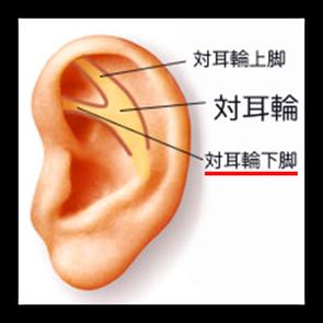 耳ツボの図