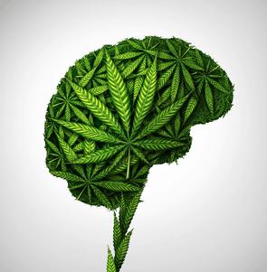 cannabis sorten unterschiedliche wirkung durch unterschiede im wetter