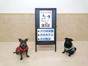 画像:犬の保育園・犬のホテル・犬の整体「笑う犬」