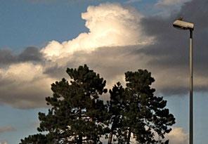 Wilken, Bäume, Wind, Vogel