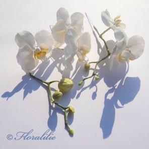 Weiße Phaleanopsis aus Zucker