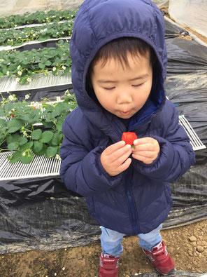 イチゴ狩り,東大阪,河内小阪,不動産,住家,すみか,sumika,おうちの専門家