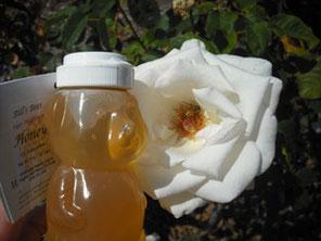 Sage Raw Honey speaks to Honey bee in Rose