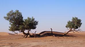 Sahara Marokko Mhamid