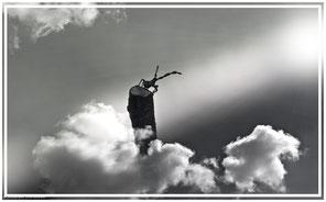 imaginer un insecte volant au dessus des nuages et comptemplant le soleil
