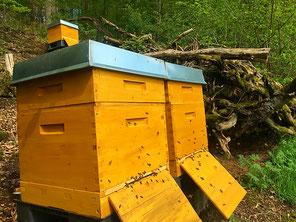 Imker Overath Honig Bienen Dadant