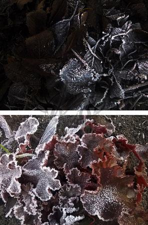 Frost lässt grüßen