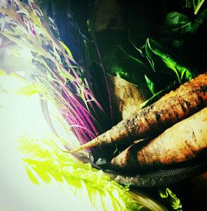 新鮮な採れたて野菜