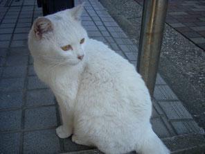 名前は「白いかたまり」です。よろしく