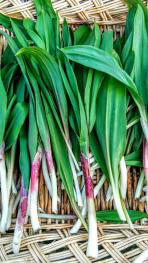 Ramps...freshly foraged by the one & only, Linda.