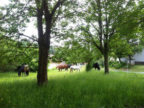 Offenstall, Aktivstall, Horsemanship