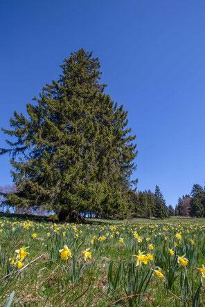 Frühling inLes Pres d Orvin