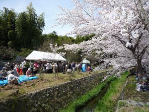第2回桜植樹花見大会