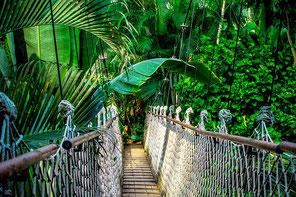 Eine Hängebrücke im Regenwald als Metapher für deine Situation.