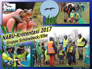 Unser NABU-Krötentaxi vom 19. März 2017 auf www.gommeranerklappspaten.de
