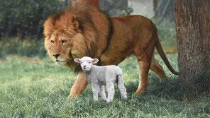 Dans le futur Paradis terrestre, les lions et les agneaux vivront ensemble et mangeront de l'herbe. La paix entre les animaux et entre les humains et les animaux. Les lions seront inoffensifs.