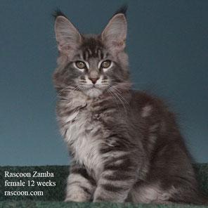 Rascoon Zamba