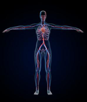 病気回復や腰痛・肩こりなどの回復が循環を良くすることで回復されるとすれば、何を行えばよいのかが分かってきます。