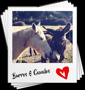 Algarve Ausflug, Pferd und Esel an der Costa Vicentina. Radtour mit Algarve Bike. E-Bike