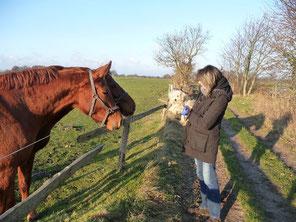 """Das """"Pferdedorf"""" für Reiter - Cuxhaven-Holte-Spangen"""