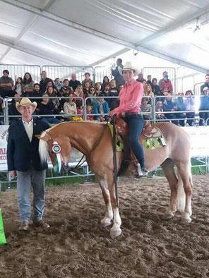 Priska Kelderer con Lilly, al Campionato Nazionale Haflinger Western a Rustega (PD). Cavalcare a Caldaro; squola equestre; cavalli; Haflinger