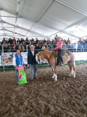 Priska Kelderer auf Lilly, beim Campionato Nazionale Haflinger Western in Rustega (PD). Reiten in Kaltern am See; Reitschule; Pferde; Haflinger