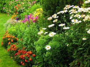 Многолетние цветы для оформления клумбы. многолетники.