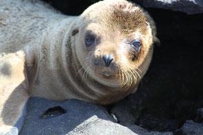 Buchen Sie Ihre Kreuzfahrt zu den Galápagos Inseln mit ECUADORline