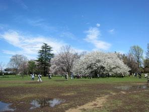 小金井公園にて 2017/4/12