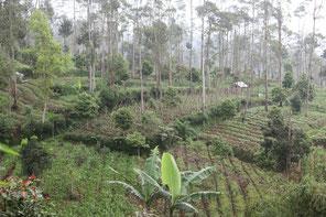 """© Wolfgang J. Fischer - Indonesien """"reforesting"""""""