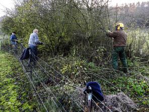 Ehrenamtliche stutzen die Hecke entlang der Streuobstwiese. - Foto: Kathy Büscher