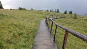 Brücke Holzbrücke Sumpf Moor Zams Wenns Alpen Österreich E5