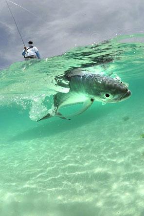 Fly fish Venezuela, FFTC.club saltwater destination, Los Roques, Fly fish saltwater destinations for Jacks, Barracudas, Bonefish, Snapper, Snook, Bonitos.